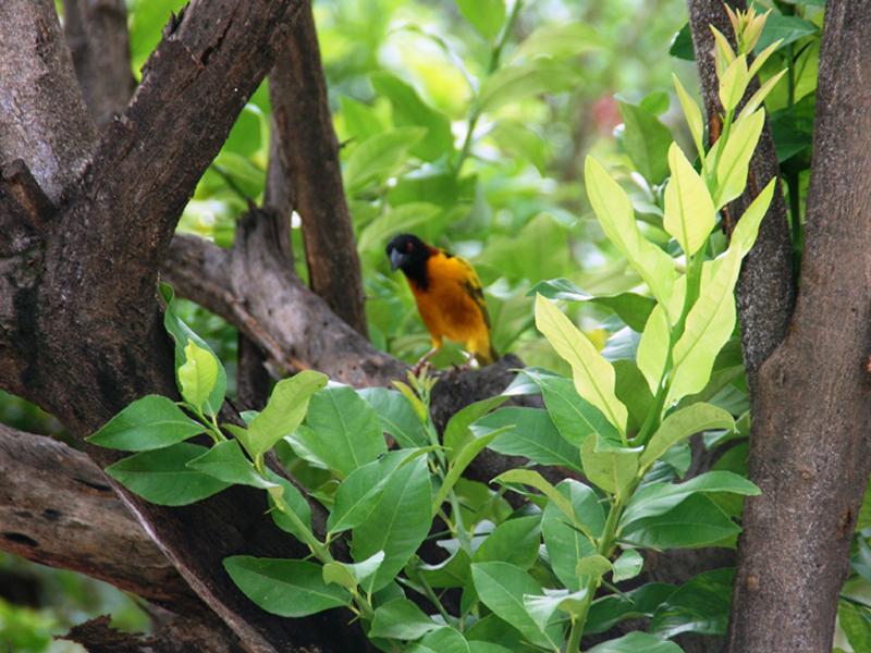birds in the garden Weever.jpg