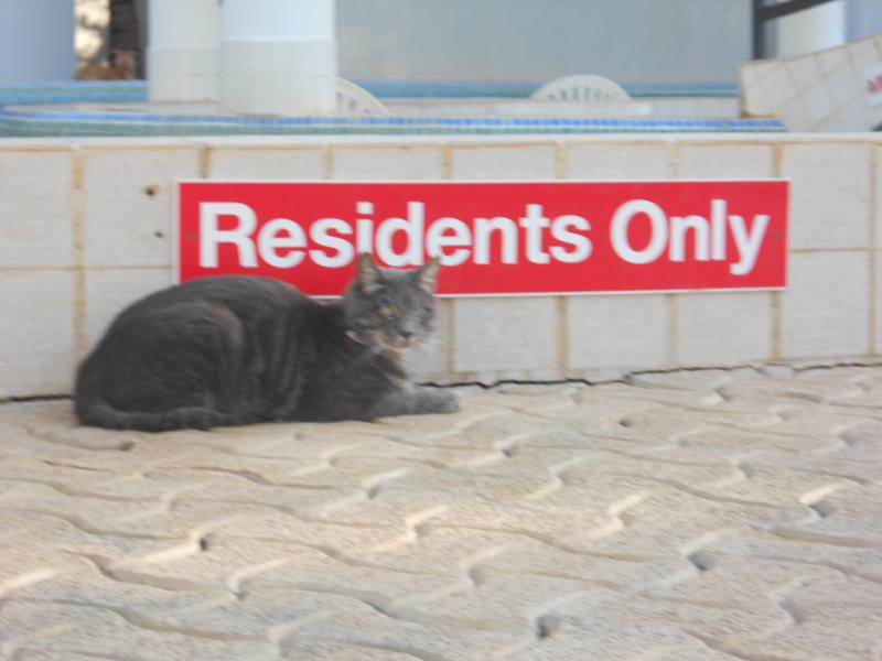 Our resident pet cat.JPG