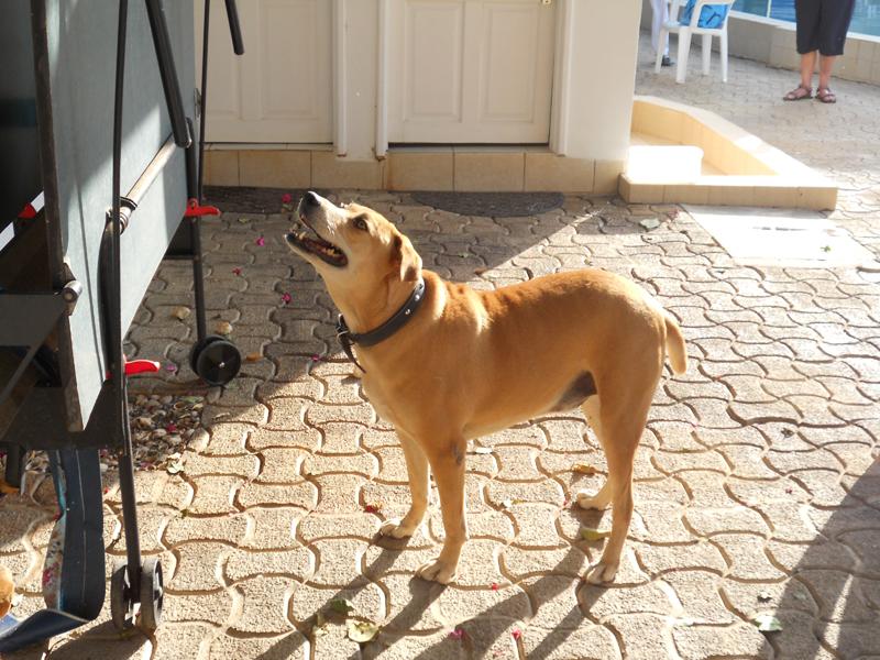 Our resident pet dog.JPG