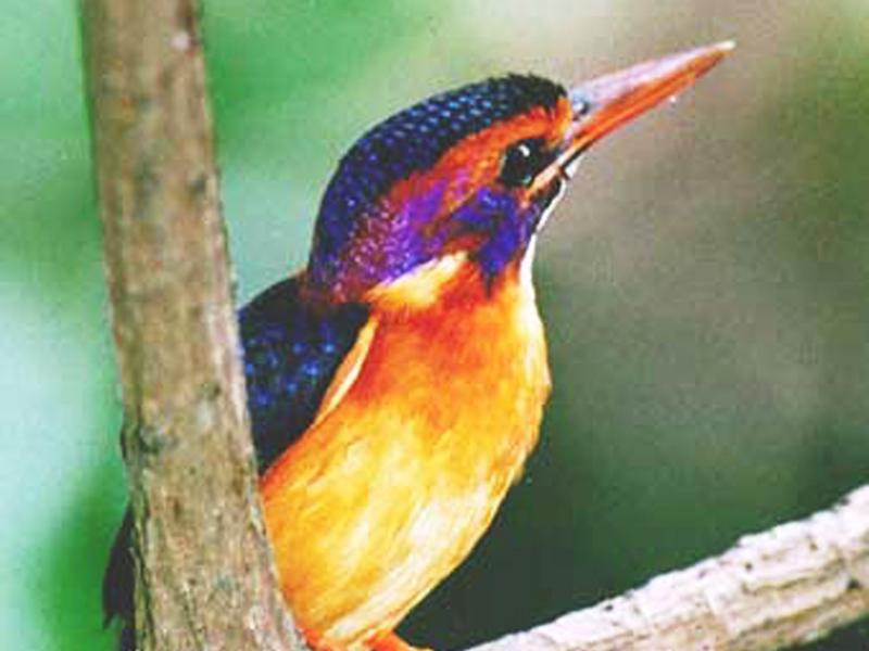 more birds in garden.jpg
