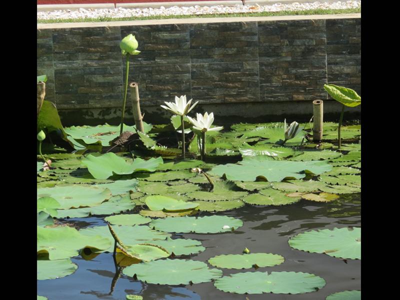 Garden 026 (1).jpg